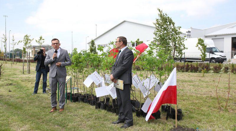 Zasadzono Dęby na Stulecie Niepodległości Polski