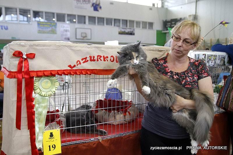 """""""Hetmańska"""" Wystawa Kotów Rasowych"""