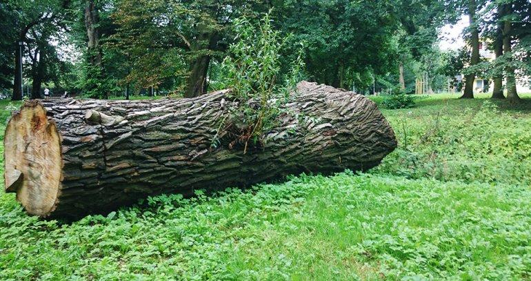 UWAGA ! – zmiany dotyczące zasad wycinki drzew