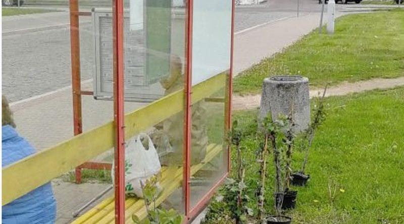 Zamojskie przystanki w pnączach
