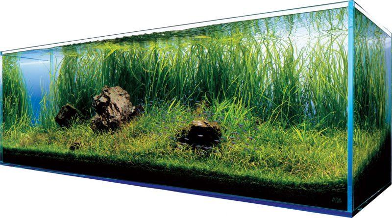 Rośliny in vitro - dlaczego fajnie je mieć w swoim akwarium?